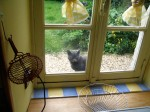 Gite in Normandy: cat